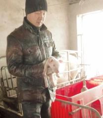"""江苏扬州""""养猪倌"""":带动身边农户一起致富"""