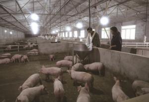 四川:曾枝回乡创业 新型养殖圆梦想