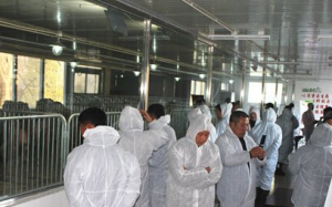 京津冀规模猪场考察团参观北京养猪育种中心种猪场
