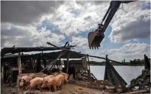 猪场拆迁潮下一步向哪?
