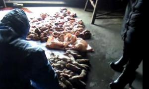 江苏如东警方查获病死猪肉三吨 大部分未流向餐桌