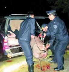 广东广州荔湾私宰猪肉窝点被取缔