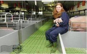 欧盟猪价:德国使得市场动摇―行情下降