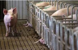 芝加哥商业交易所(CME):2015年猪肉行业出口价值量降幅最大