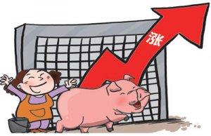 猪价维持高位 新五丰涨停