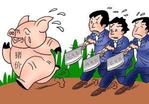 """猪粮比已进入""""红色警戒"""",政府调控会提前来临么?"""