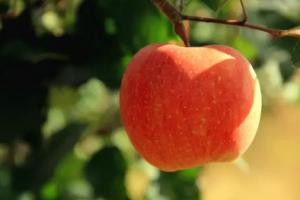 如何把一个苹果销(忽)售(悠)到100万