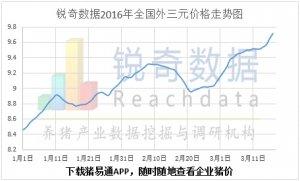 3月17日猪评:毛猪价继续上调大猪场持续上调乏力