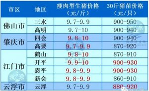 牧之源--广东3月17日猪讯