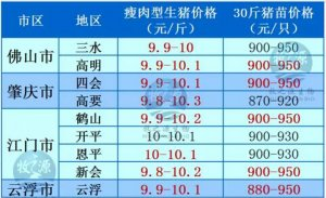 牧之源--广东3月19日猪讯