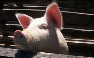 2017年底前阜阳禁养区内养殖场将关闭或搬迁