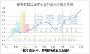 3月21日猪评:毛猪价格持续攀升 风险再次凝聚