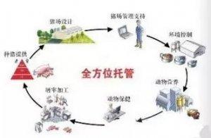 让你读懂中国养猪场托管或服务模式的现在和未来!!