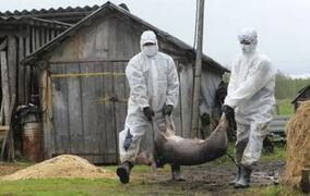 拉托维亚新报导26例非洲猪瘟(ASF)