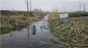 河南潢川一养猪场污染屡禁不止 环保部门称正在积极解决