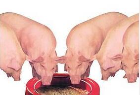 购买仔猪饲料时需要问的 8 个问题