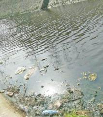 养猪场黑水排灌渠恶臭熏人 下游鱼死几千斤(图)