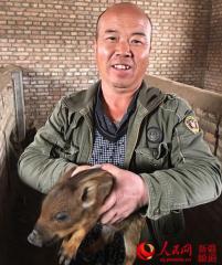 新疆:一六一团职工养殖杂交野猪成赚钱商机