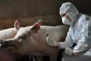 站在养殖的角度对问题疫苗的思考