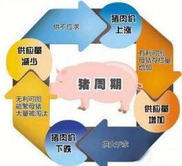 """猪价再涨可能性小?""""猪周期""""现象将减弱"""