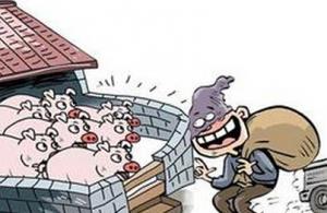 湖北京山一养猪户偷仔猪落法网