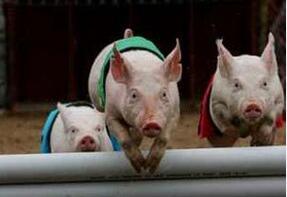 欧盟猪价:复活节推进市场交易情况