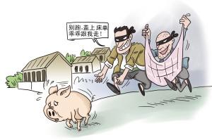 湖北京山养猪户挖墙入室偷走他人62头仔猪落法网