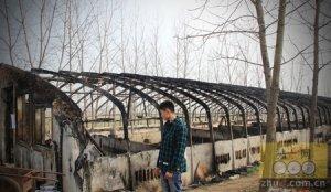 猪场着火,29头猪被烧死,损失近10万