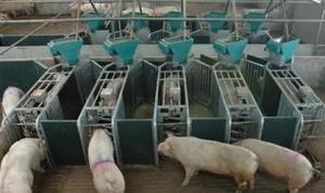 山东肥城全面推进畜牧强县建设 建成规模饲养场区482个