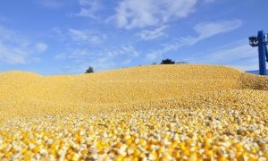 英媒称我国玉米临储取消已冲击全球市场