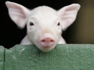 陕西省发布生猪价格预警