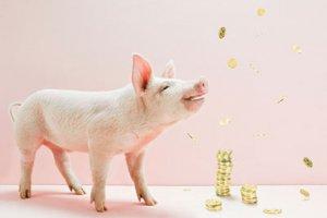 养猪十多年 为何她都在赚钱?