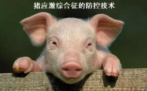 生猪生产管理中的应激综合征防控技术