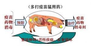 筛选拥有健康肠菌的猪只可能降低农场抗生素的使用
