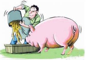 降低生猪气味的营养性策略