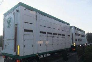 猪肉生产商承诺在运输过程中确保动物的安全与舒适