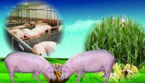 农业部7日举行发布会介绍玉米结构调整和生猪生产形势