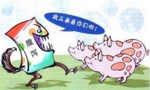 实用猪流行性腹泻防控经验分享――美国篇