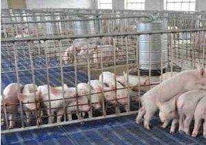 """""""优秀养猪企业""""必备的的15大成功管理措施"""