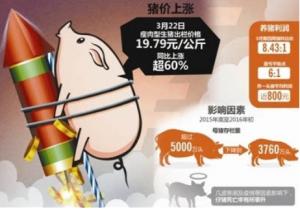 探访北京猪肉市场:进口猪比国产猪便宜一半