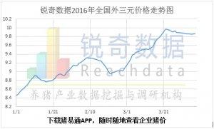 2016年4月7日猪评:供需僵持观望猪价整体趋稳
