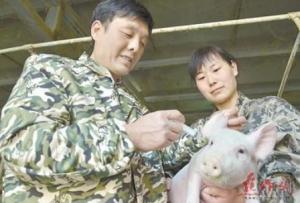 中学教师 养猪闯出新天地