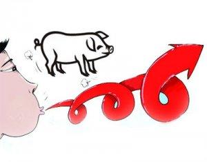 受供求关系影响 广西生猪价格持续较快上涨
