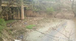 湖南白石港频现死猪;环保志愿者呼吁:加强病死畜禽管理
