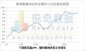 锐奇数据16年15周猪评:猪价震荡走低可能性加大