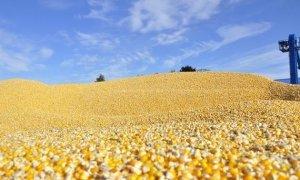临储政策取消对玉米市场冲击多大?