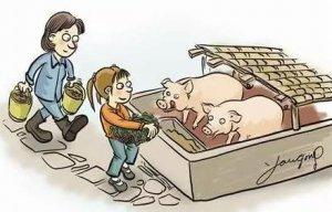 母猪产前要控料吗?不能再错了!