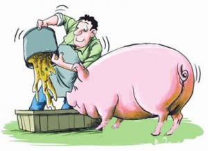 """勐润边境检查站的""""猪司令"""""""