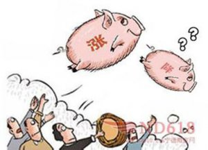 生猪价格:为何涨?何时降?
