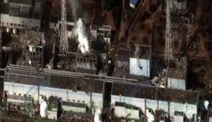 放射性猪占领日本福岛农场